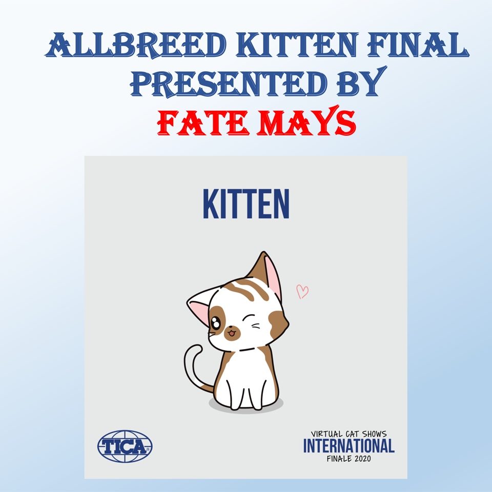 Allbreed Kitten Final - Fate Mays
